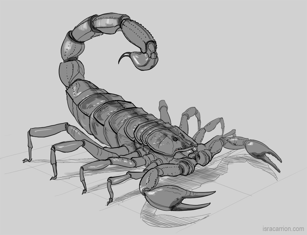 Free Coloring Pages Of Scorpion Drawn